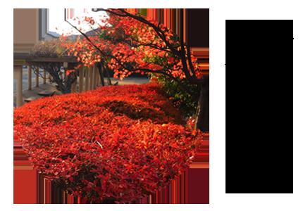 秋の季節の写真