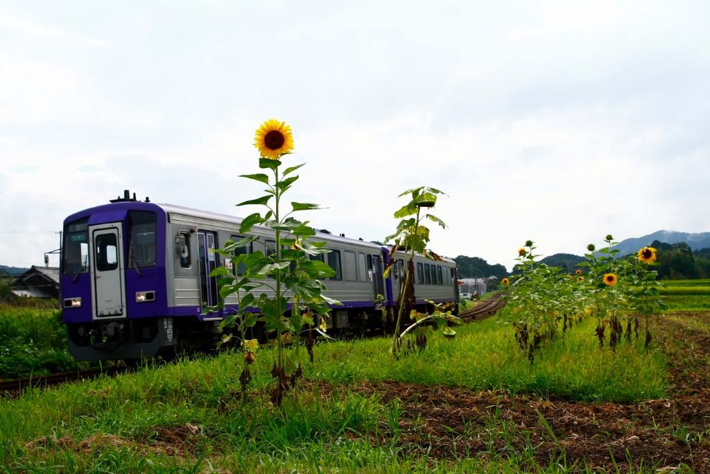 関西本線亀山~加茂間「ICOCA」導入 - 2021年春から